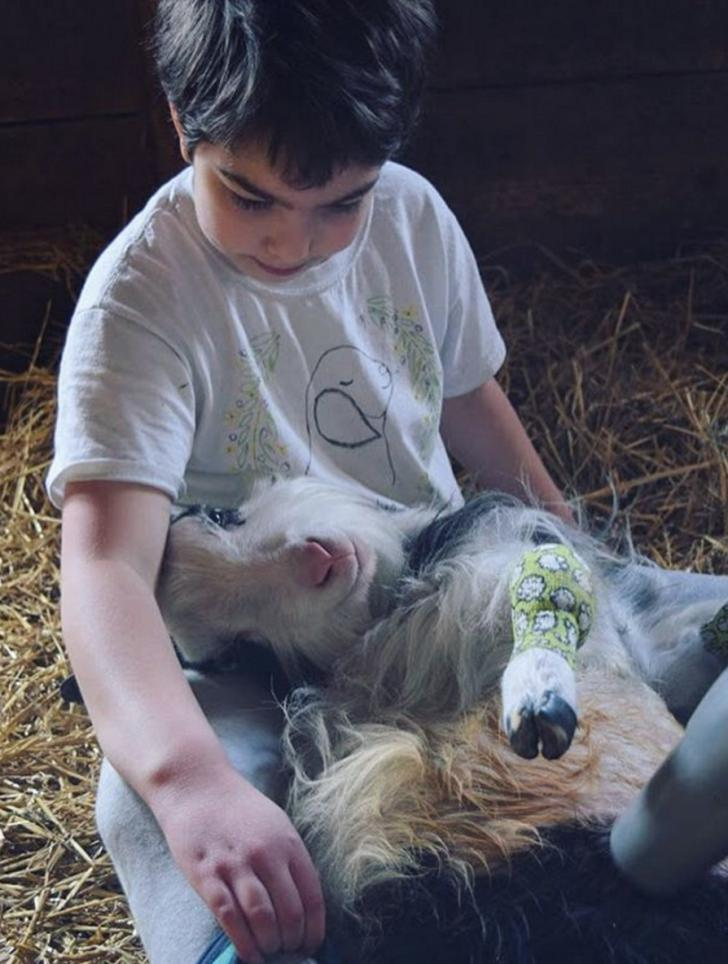 Baine, the dwarf goat snuggles with a kid