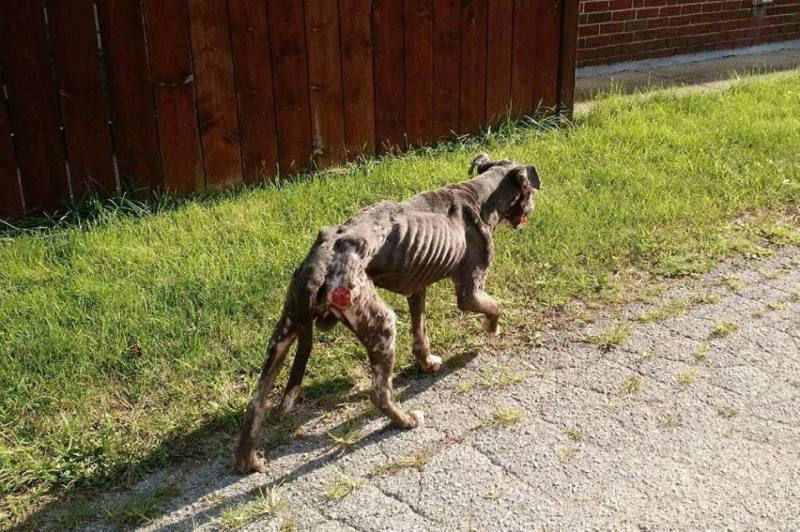 Augustus emaciated walking around