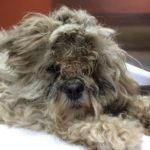 Shelter Animal Transformation - Antonia is found