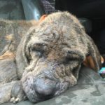 Halo Asleep In Route To Vet - Transformation