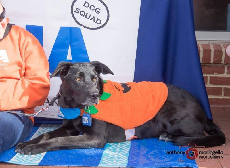 Shelter Dog Gets A second chance - Lennox in Pumpkin Outfit