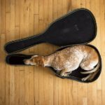 Strange Sleeping Positions - guitar dog