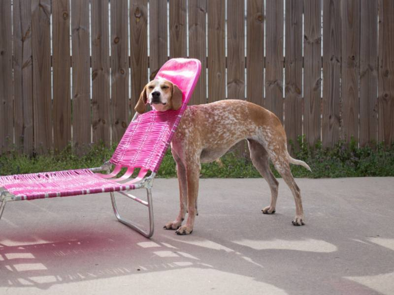 Silly Animals - Dog Stuck In Lounge Chair