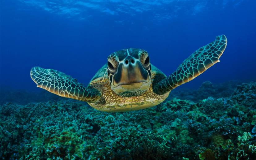 Animals Save Human Lives - Turtle
