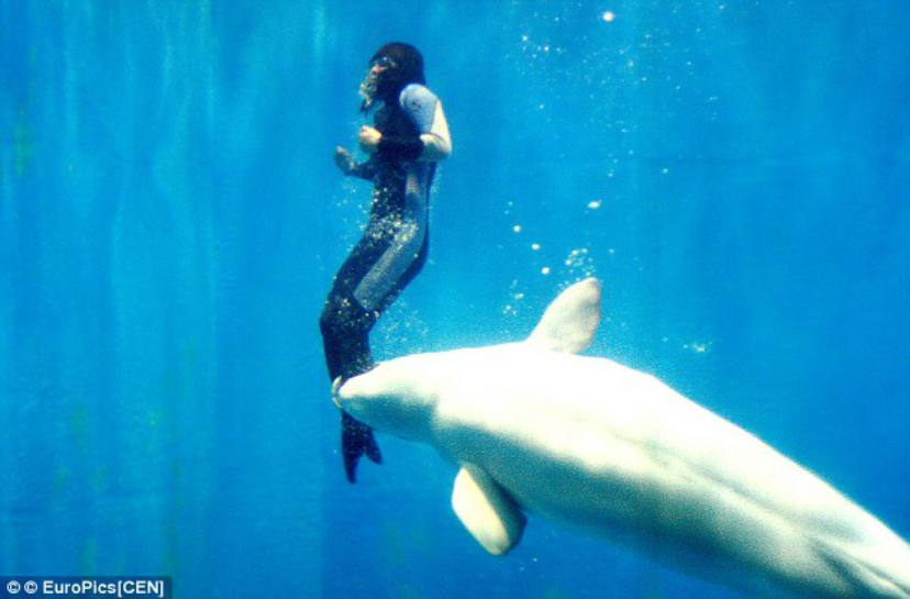 Animals Save Human Lives - Whale and diver