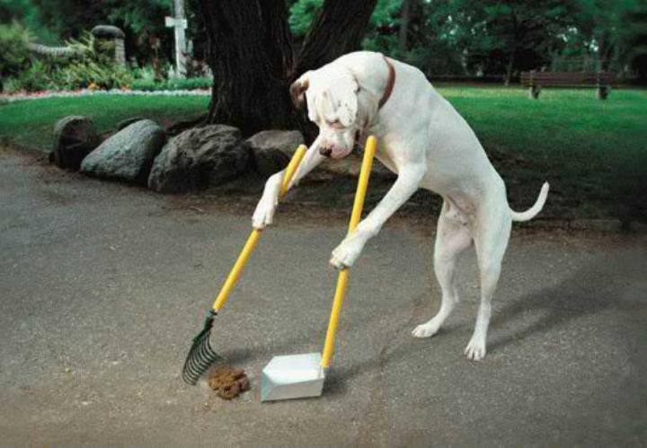 1 dog-doing-his-own-chores