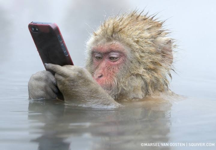 Animals Behaving Like Humans - monkey iphone