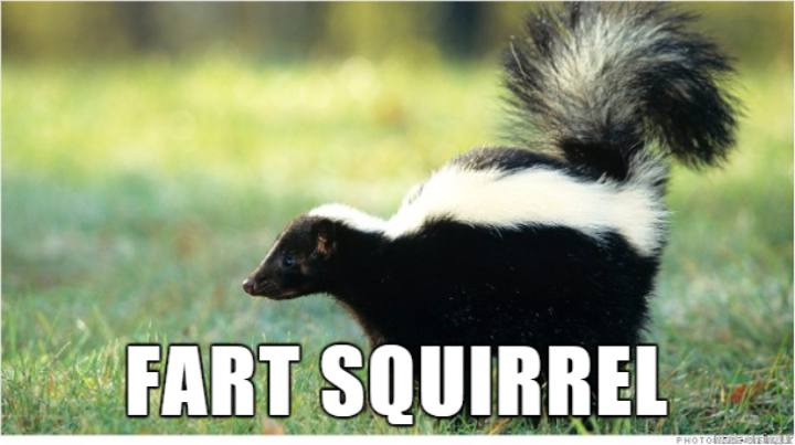 Internet Renames ANimals - Fart Squirrel